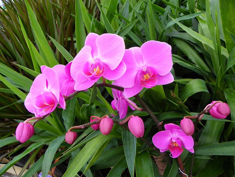 ảnh đẹp của hoa phong lan tím