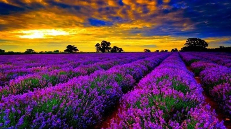 TOP 10+ loài hoa đẹp nhất thế giới, loài thứ 5 ở Việt Nam rất phổ biến