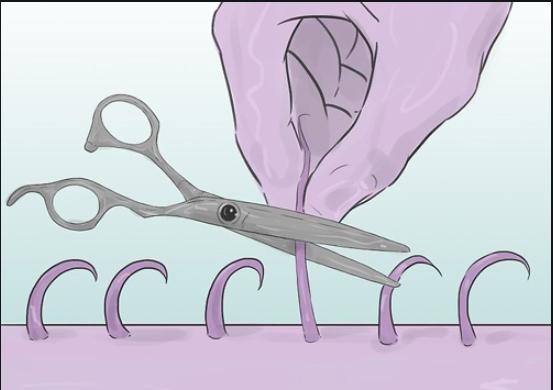 Chi tiết A - Z cách tỉa lông vùng kín bằng kéo siêu quyến rũ
